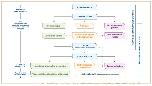 Schéma descriptif du processus de transplantation rénale